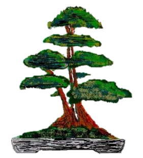 Website of The Cheshire Bonsai Society